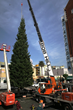 The sixty-foot White Fir is guided into place on Hollywood Boulevard at L. Ron Hubbard's Winter Wonderland for the set's 35th year (1983-2017)