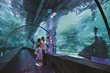 Polin Aquariums Launches Funtastic Aquariums Concept