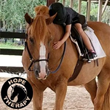 Roderick Crabbe Insurance Announces Charity Drive to Benefit Local Organization Providing Horse-Assisted Occupational Therapy