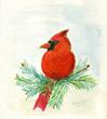 Cardinal artwork by Dorothy Ives, New Perspective Senior Living, Waconia, Minn.