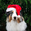 Is the Family Dog Ready to Greet Holiday Company?