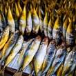 Impact Fund Surpasses $17 Million for Sustainable Coastal Fisheries in..