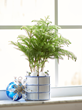 Celebrate the Holidays with Festive Houseplants from Costa Farms