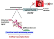 Okayama University research: New method for suppressing lung cancer oncogene