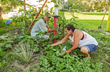Santee Sioux People Lack Access to Healthy Foods, According to Report