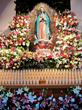 <CFM Virgin of Guadalupe Flowers>