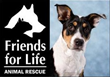 The Thorpe Agency Supports Local Pet Rescue Shelter in Charity Drive to Save Animals from Euthanasia