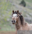 Interior & Agriculture Appropriations bills could strip federal protections against mass killing of wild horses & burros & include dangerous language to rescind federal ban on U.S horse slaughter.