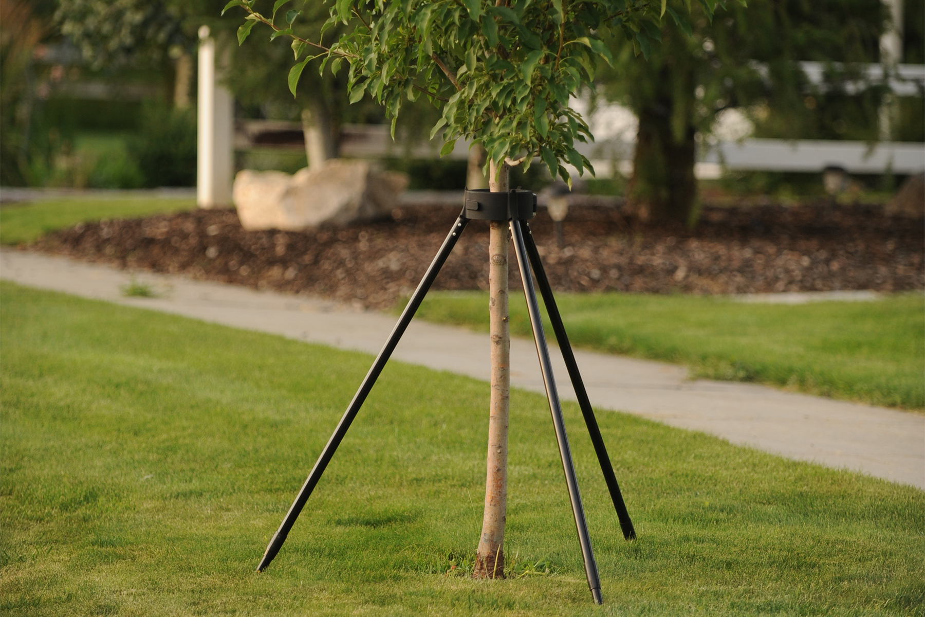 easily foster the natural growth of new trees with kradl available