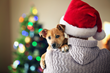Embrace Pet Insurance Offers Tips to Include Dogs Safely in a Holiday Celebration