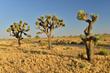 Trek Travel Debuts Palm Springs & Joshua Tree Bike Tour