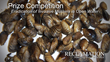 Bureau of Reclamation Launches Prize Competition Looking to Eradicate Invasive Quagga and Zebra Mussels