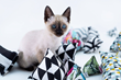 Minoumi launches Kickstarter Campaign for Designer Cat Toys