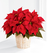 Blooms Today Releases Fresh New Holiday Flowers