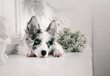 NuVet Labs Launches a Pet Holiday Contest to Benefit Pet Parents and a Rescue of Their Choice