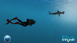 Dr. Sylvia Earle dives with a hammerhead shark in 'Dive with Sylvia VR'