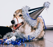 Five New Year Resolutions That Will Improve Life for the Family Dog