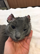 Alley Cat Rescue Saves Tortured Cat, Offers $2,500 Reward For Information