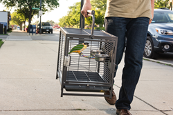 Wrought Iron Travel Carrier by Prevue Pet