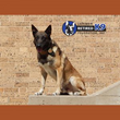Swanty Insurance Group Announces Regional Charity Drive to Provide for Retired Police Dogs