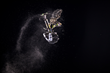 Monster Energy's Jackson Strong Takes Silver in First-Ever Snow Bike Best Trick