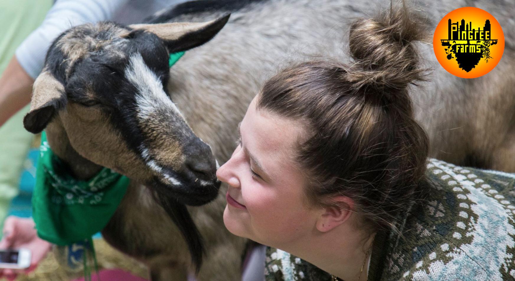 Pingree Farms Goat Yoga Is B A A A Ck