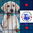 McCullars & Lincoln Insurance Announces Charity Drive to Find Homes for Abused and Injured Pets