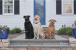 HomeAway Unveils the Most Dog-Friendly Destinations in Celebration of the Year of the Dog