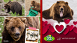 "Avitus Group & The Alaska Zoo Partner for Valentine's Day ""Bear Hugs"" Campaign; Invite Community to Help Make February Brighter for Kids in the Hospital"