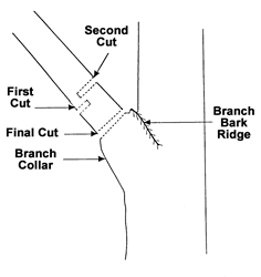 TCIA Three Cuts Diagram