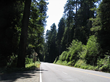 Advantages of a Luxury Car Rental Highlighted by Lonely Planet's Selection of Northern California Redwoods as Top Underrated Destination, says Luxury Line Auto Rental