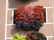 Monroe Garage living wall