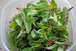 Fight the Winter Blues – Grow Nutritious Microgreens Indoors