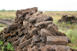 Stacks of peat drying after being dug from bogs.