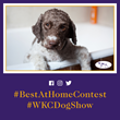 Social Agency GLOW Leads Westminster Kennel Club Dog Show to Record Engagement Among Millennial Audience Behind Expansive 2018 Campaign