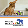 Designers Insurance Agency Embarks on Charity Drive to Rescue Abused and Neglected Animals