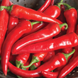 Spice up Meals with Winning Hot Peppers