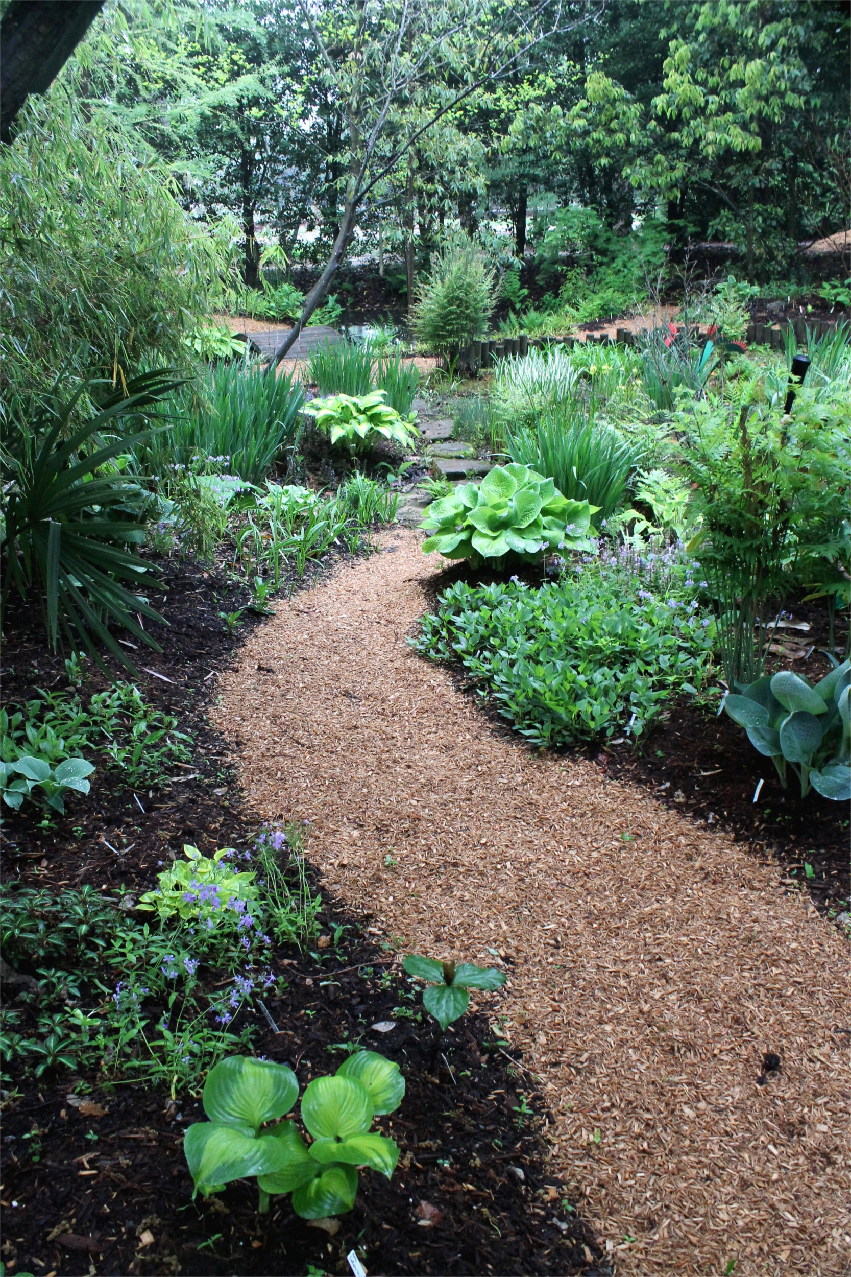 Plant Delights Nursery At Juniper Level Botanic Garden Is Pionate About Hostas And They Are One Of Our Active Breeding Programs
