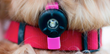 The Bkin helps add visibility for pets when clipped to their collars.