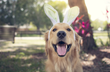 Be Egg-tra Cautious When It Comes to These 5 Easter Pet Dangers
