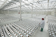 Fluence Shines Light on MedMen Mustang: State-of-the-Art Cannabis Greenhouse