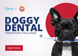 Arm & Hammer and Quirky to Invent New Dental Products for Dogs
