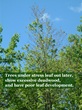 Give Trees Some Love for Arbor Day with Tree Care Tips from Giroud Tree and Lawn