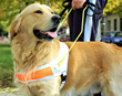 The Mautz Agency Launches Charity Drive to Provide Service Dogs to Children, Veterans, and Disabled Virginia Residents