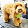 Morris Animal lnn Introduces Canine Blow Out Bar to Spa and Grooming Services