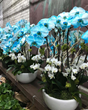 CA Flower Mall Hosts 24/7 Mother's Day Flower Marathon