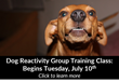 Park Cities Pet Sitter Announces a Group Training Class Geared Towards Owners of Dogs with Dog Reactivity.