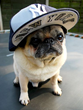 "NutriSource Pet Foods Launches ""Pinstripe Pets"" Contest with New York Yankees"