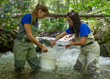 Restoring Brook Trout in the Appalachian Mountains