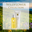 Eminence Wildflower Collection